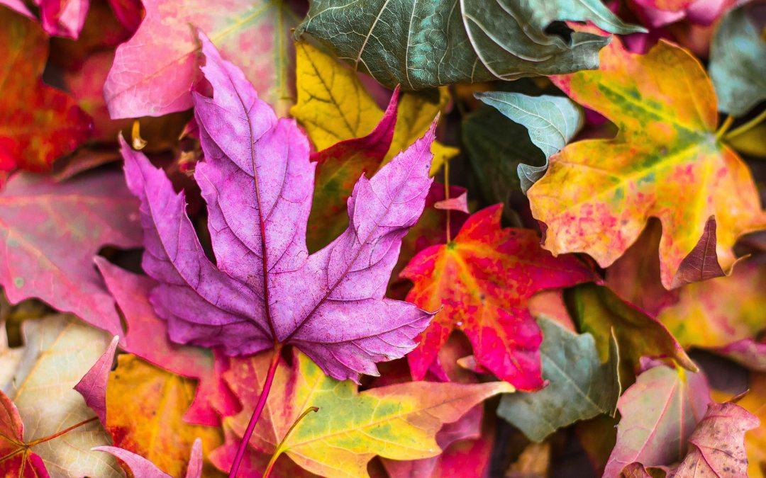 Herbst: Wenn die Blätter fallen…